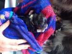 Pup 6 Reu Black Tri