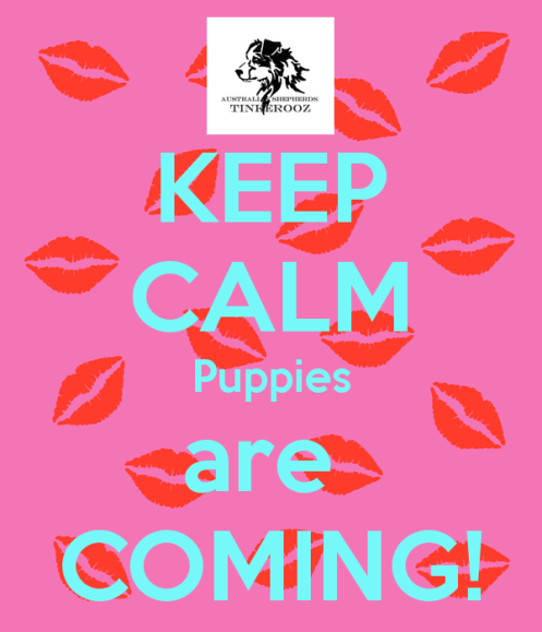 keep-calm-puppies-are-coming